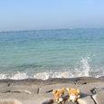 沖縄旅行~海が好き~