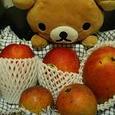まんごーが好き